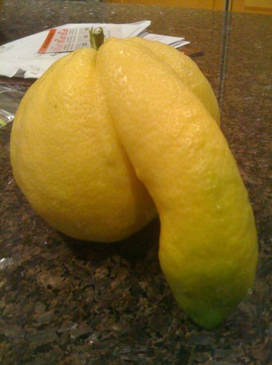 lemon with penis