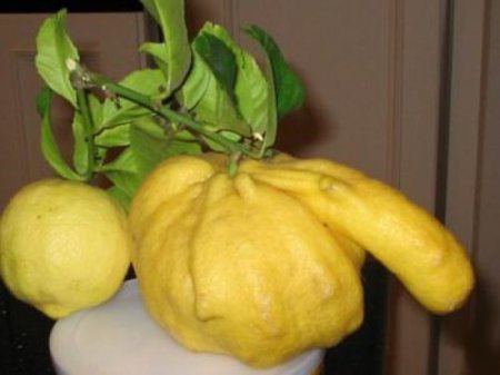erotic lemon