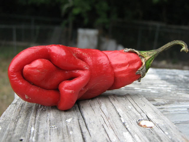 red pepper vagina