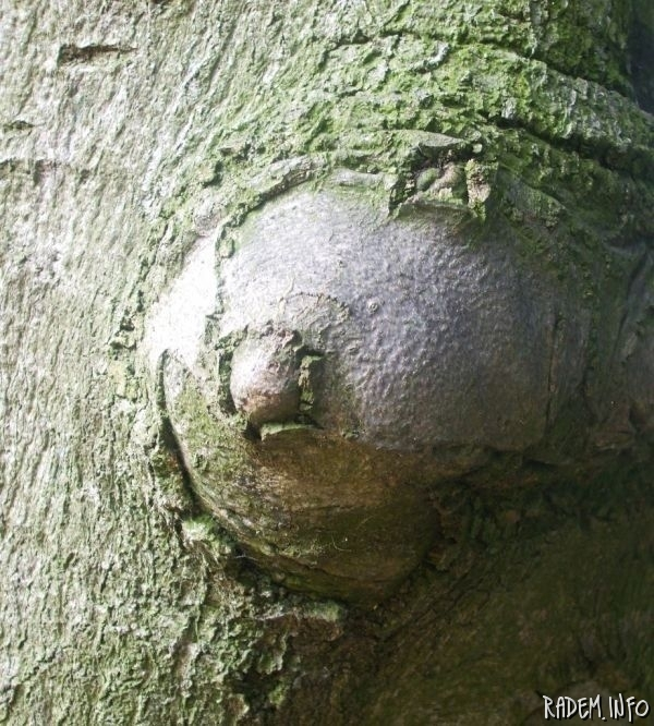 tree with breast