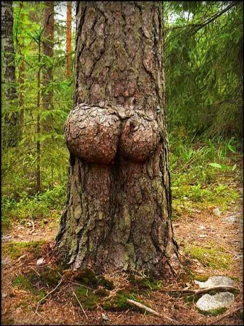 [Image: tree-breast8.jpg]