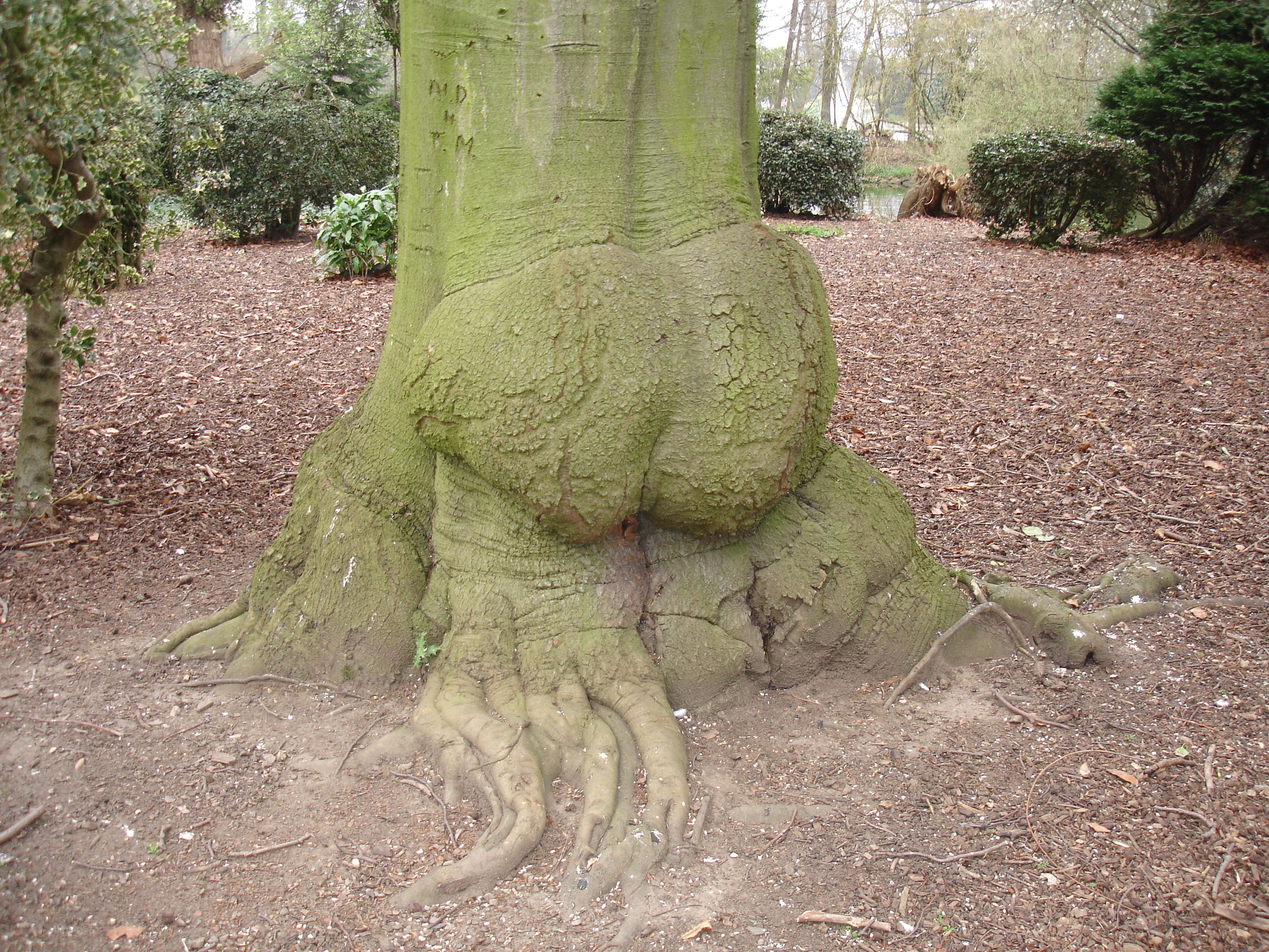 butt of tree