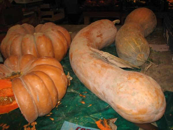 long penis-shaped squash