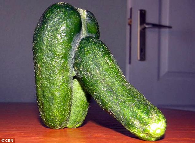 penis-like cucumber