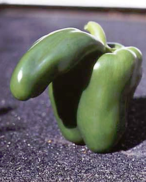 erotic green pepper