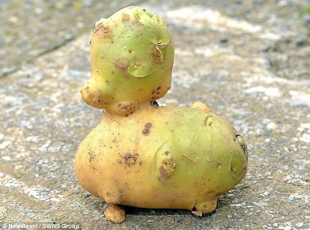 duck-shaped potato