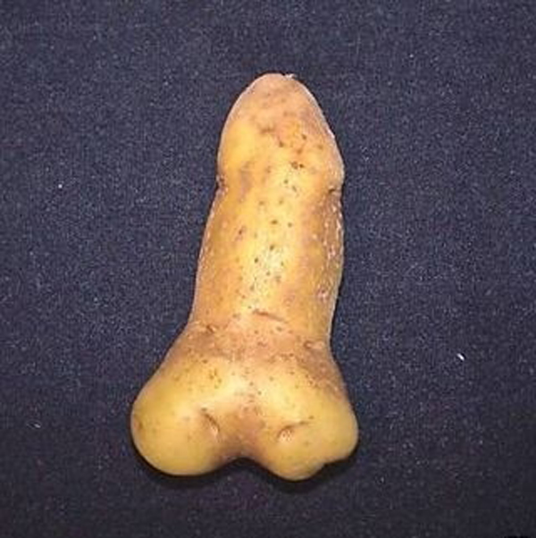 dick potato