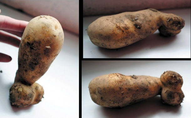 potato dick